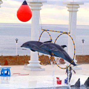 alanya-dolphin-park