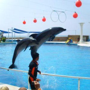alanya-dolphin-park2