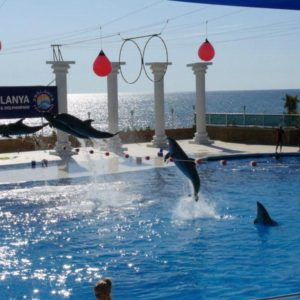 alanya-dolphin-park3